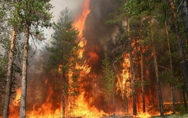 Біля Чорнобильської атомної електростанції уже третю добу горять ліси, в ДСНС запевняють, що на рівень радіації ситуація не вплинула.