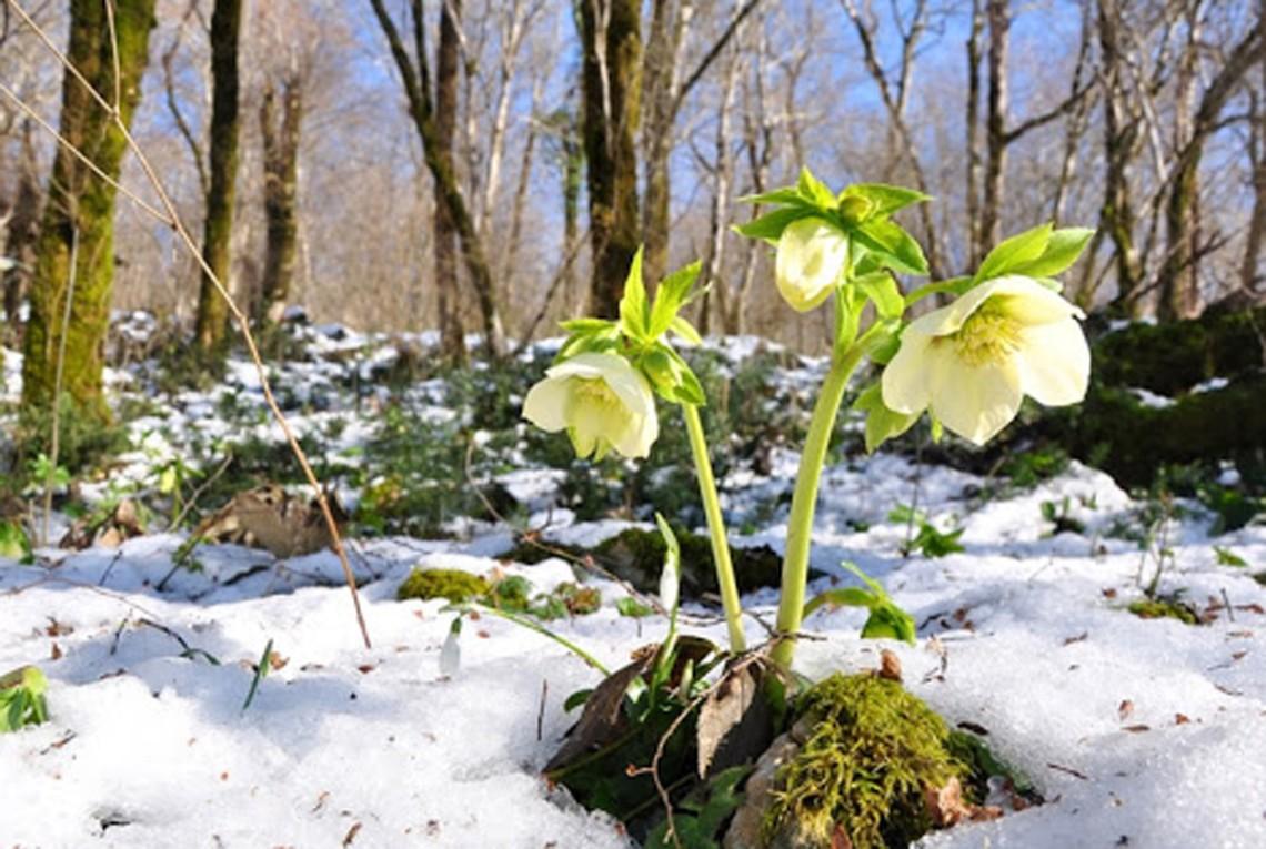 Теплу зиму в Україні та в Європі спровокувала зона низького тиску на Північному полюсі, яка утворилася з нез'ясованих поки що причин.