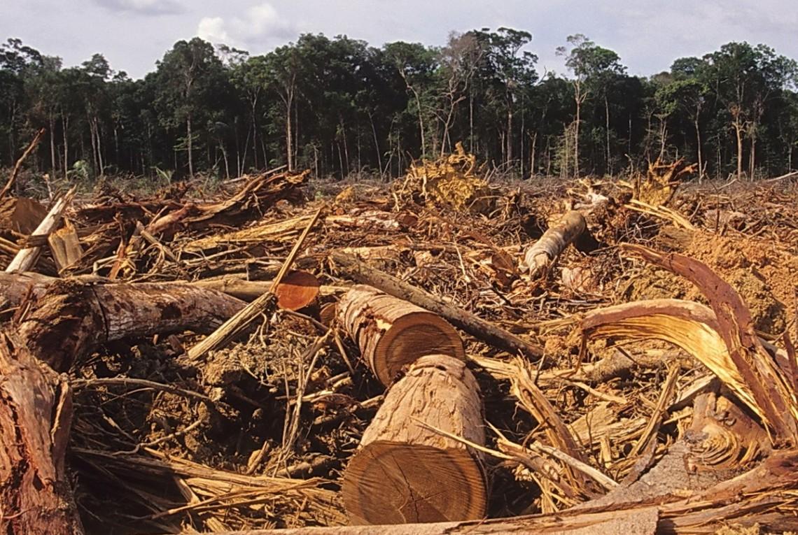 Вирубка лісу в Україні зросла в сім разів » Слово і Діло