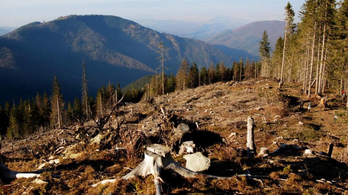 Одной из причин паводков на западе Украины является масштабная вырубка леса. Слово и дело разобралось, как с ней обещают бороться власти.