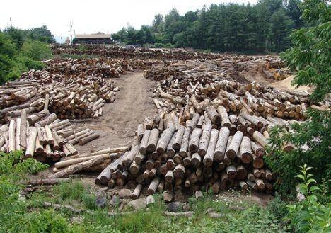 Питання вирубки українських лісів завжди стояло руба. Але щороку ситуація лише погіршується, а на даний момент проблема набула катастрофічних масштабів: від незаконної вирубки стали страждати не тільки цінні карпатські ліси, але і Донбас.