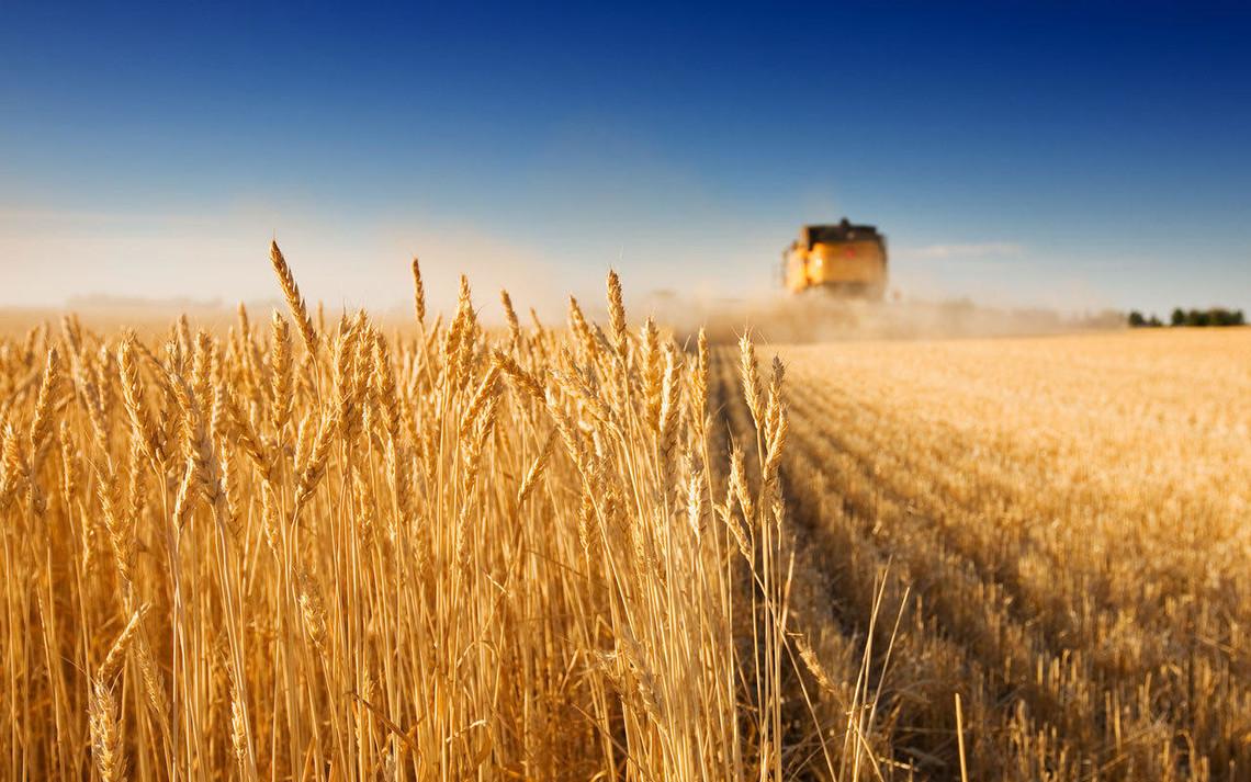 Кожен третій долар, який отримує Україна, приносить аграрний сектор. «Слово і Діло» проаналізувало, що чекає в майбутньому український АПК.