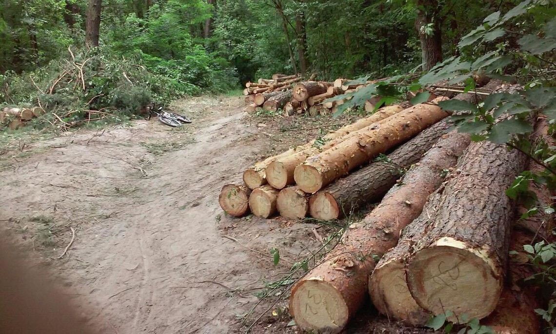 Депутати Київської міської ради запропонували ухвалити документ, яким забороняється вирубка лісів у столиці.