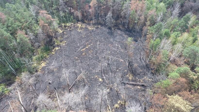 29 липня о 14:55 Головне управління ДСНС в Київській області отримало повідомлення про пожежу трав'яного настилу та лісової підстилки окремими осередками на площі близько 3 га.