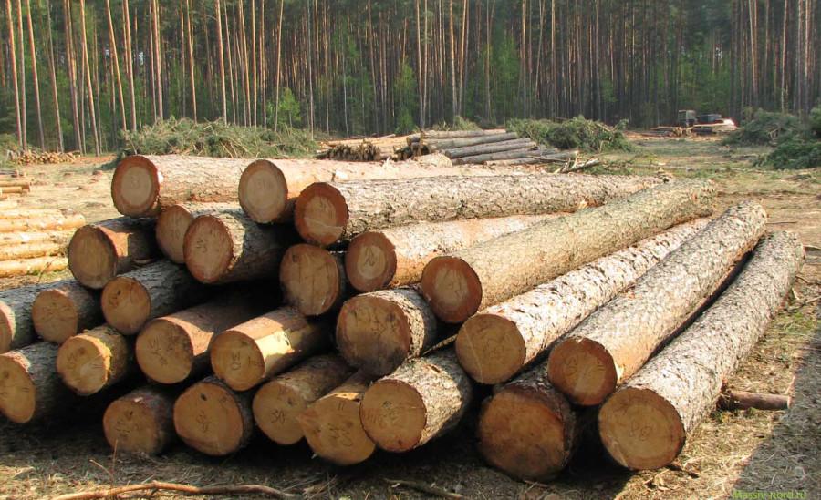 Восени Україна скасує мораторій на експорт деревини, щоб отримати другий і третій транші макрофінансової допомоги ЄС.