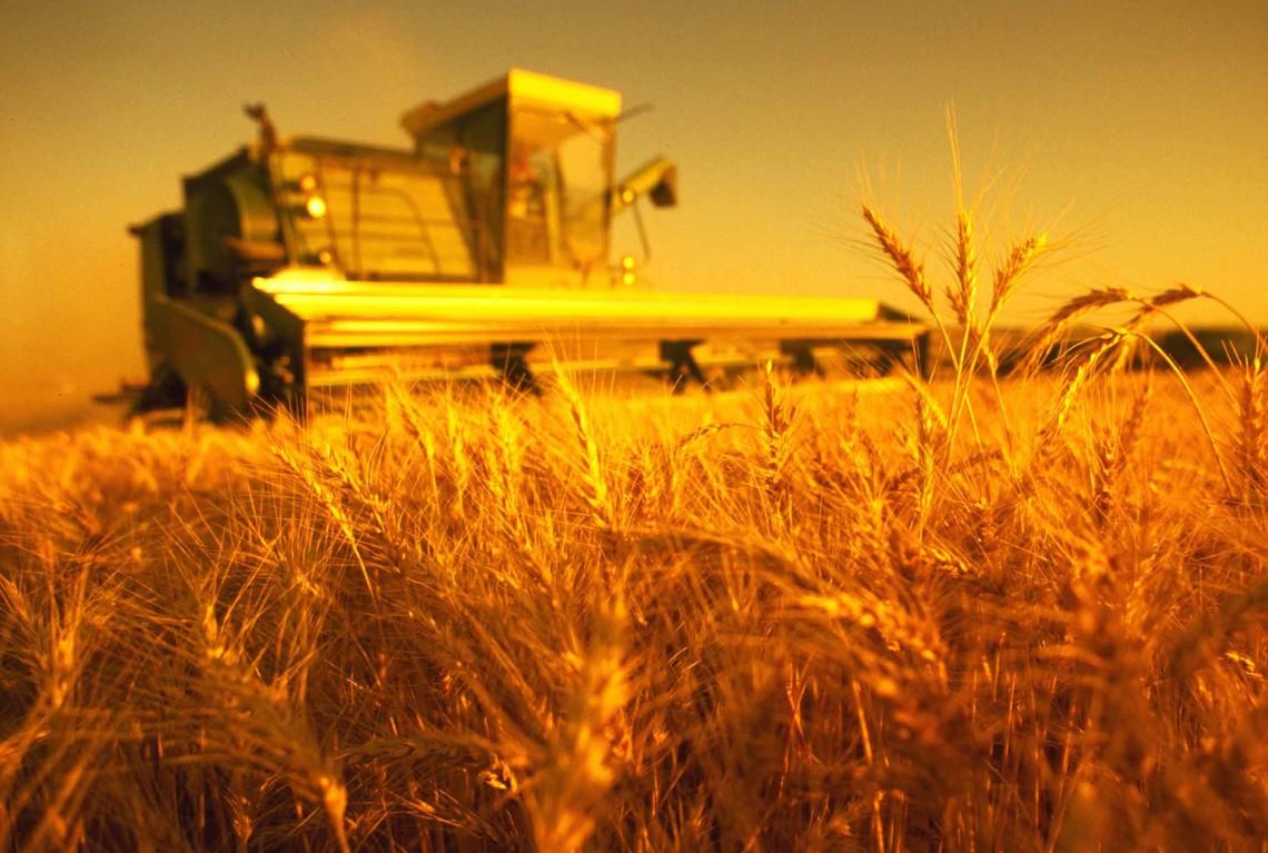 Українські аграрії зібрали 40,5 млн тонн зернових і зернобобових культур станом на 19 вересня.