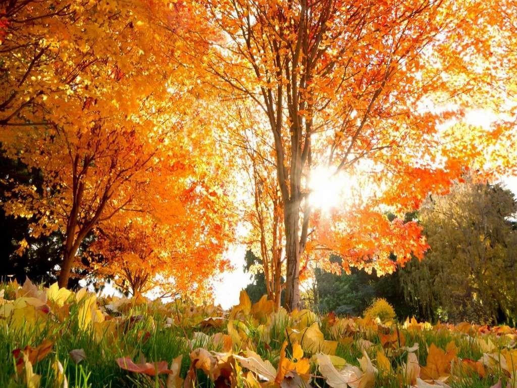 Начальник Гідрометцентру Микола Кульбіда розповів, що до кінця вересня не варто очікувати потепління, а бабине літо можливе в жовтні.