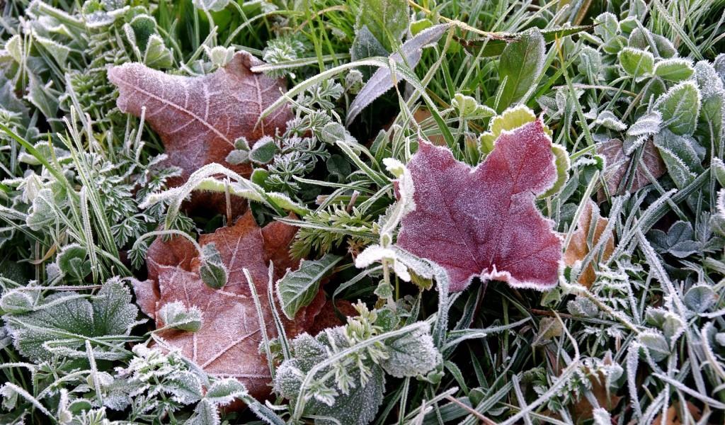 6-7 жовтня в більшості західних областей на поверхні ґрунту (місцями й у повітрі) заморозки 0-5 градусів.
