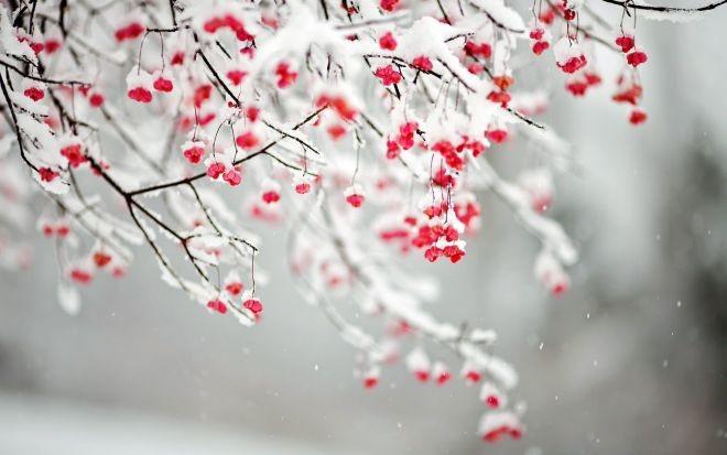 Синоптики прогнозують аномально теплу зиму за останні 30 років. Середня температура повітря взимку буде вище норми.