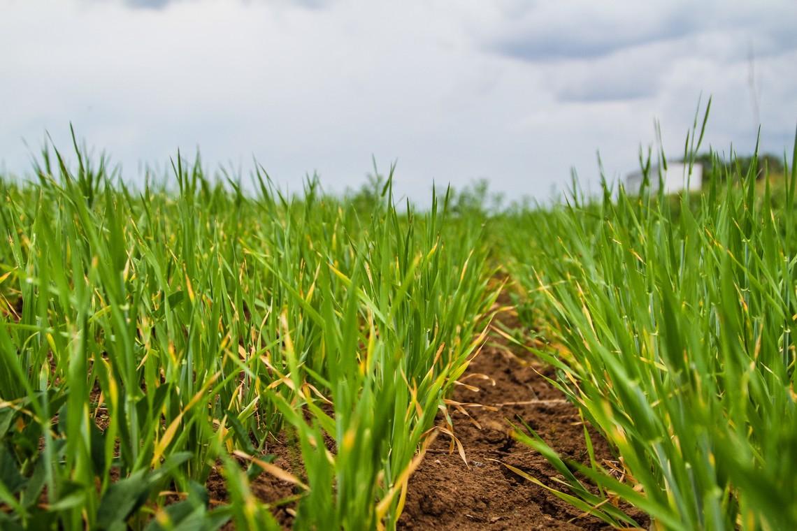 За підсумками трьох кварталів 2016 року сільгосппідприємства наростили виробництво на 0,8 відсотків, а приватні домогосподарства – на 0,9 відсотків.