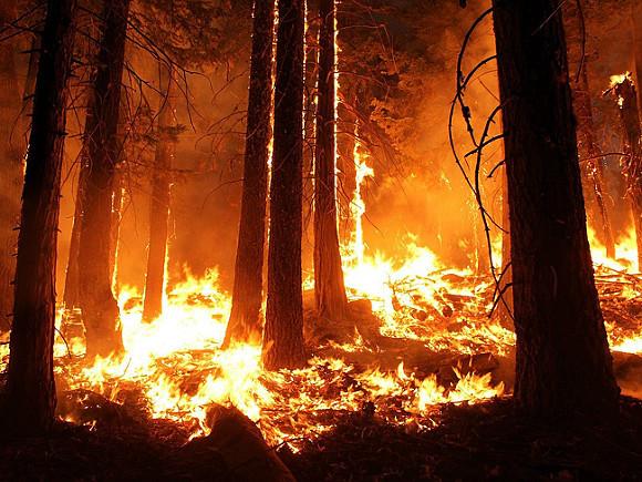 ВТеннесси объявлено чрезвычайное положение из-за лесных пожаров