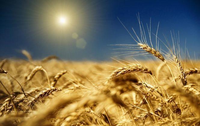 Самая высокая урожайность ранних культур наблюдается в хозяйствах Волынской, Ивано Франковской, Львовской и Хмел