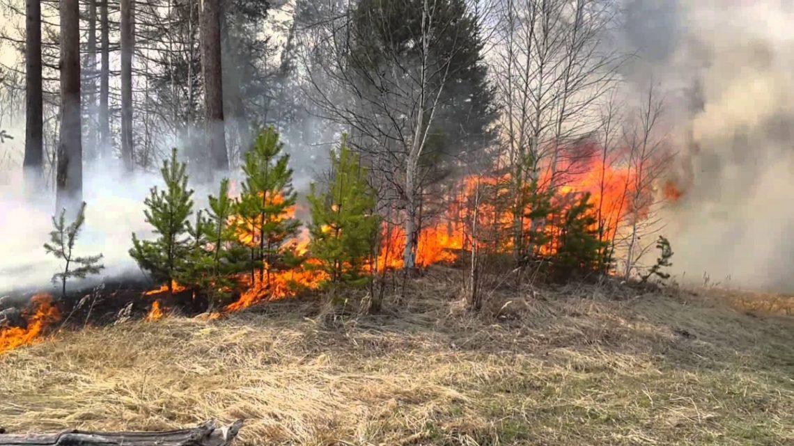 ВХерсонской области ликвидирован пожар вКостогрызовском лесничестве