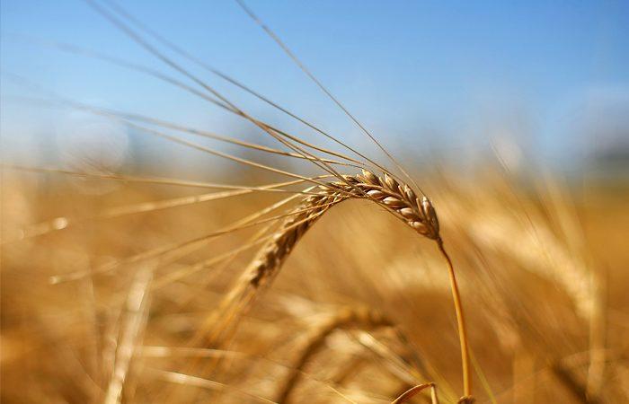 Украина натреть увеличила экспорт продуктов в EC