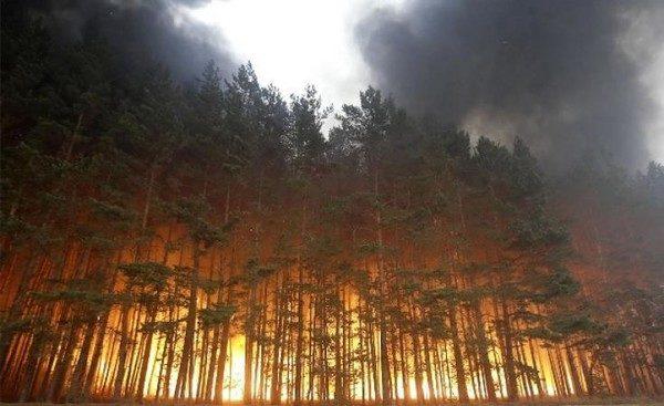 Граждан украинской столицы иобласти предупредили овысоком уровне пожарной опасности