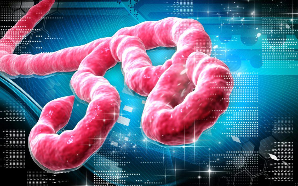 ВКонго объявили овспышке лихорадки Эбола