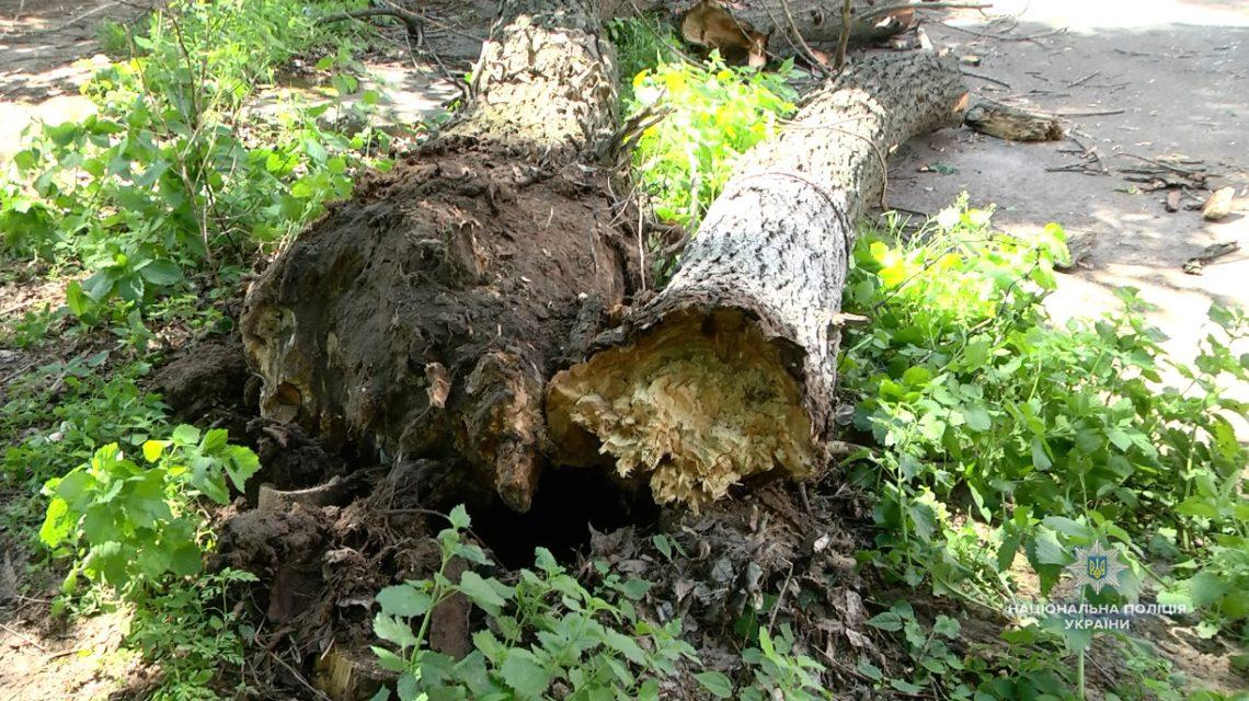 ВЧеркассах надетей упало дерево: 4 в клинике